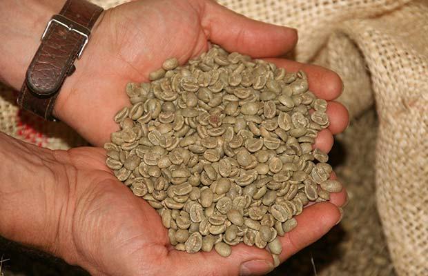 Κόκους Πράσινου Καφε