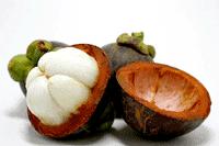 Φρούτο Carcinia Cambogia