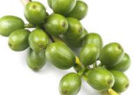 πράσινος καφές κόκκοι