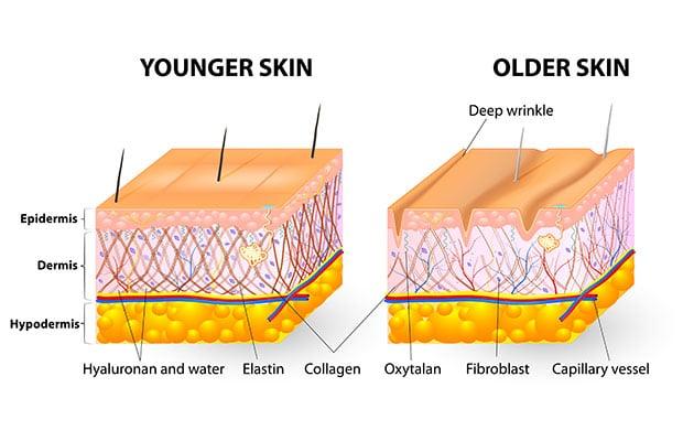 Πψς το κολλαγόνο υποστηρίζει το δέρμα